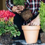 Растения на кухне: выбираем вместе